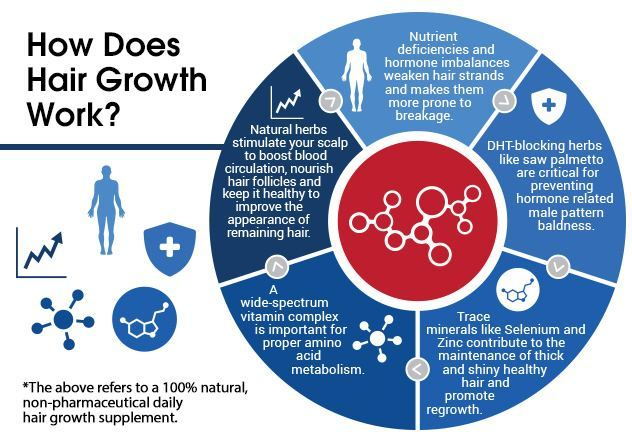 A circular graph infographic that explains how hair growth occurs.